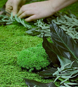 Preview Freund GmbH, production, manufacturing moss products and application - A piece of nature for your rooms