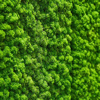 Care free moss walls, maintenance-free vertical gardens of moss and plants, biophilic design for offices, luxury spaces, hotel rooms, restaurants, spas