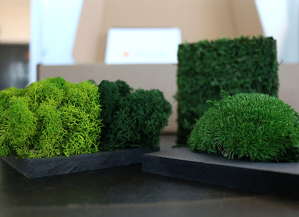 Moss wall samples