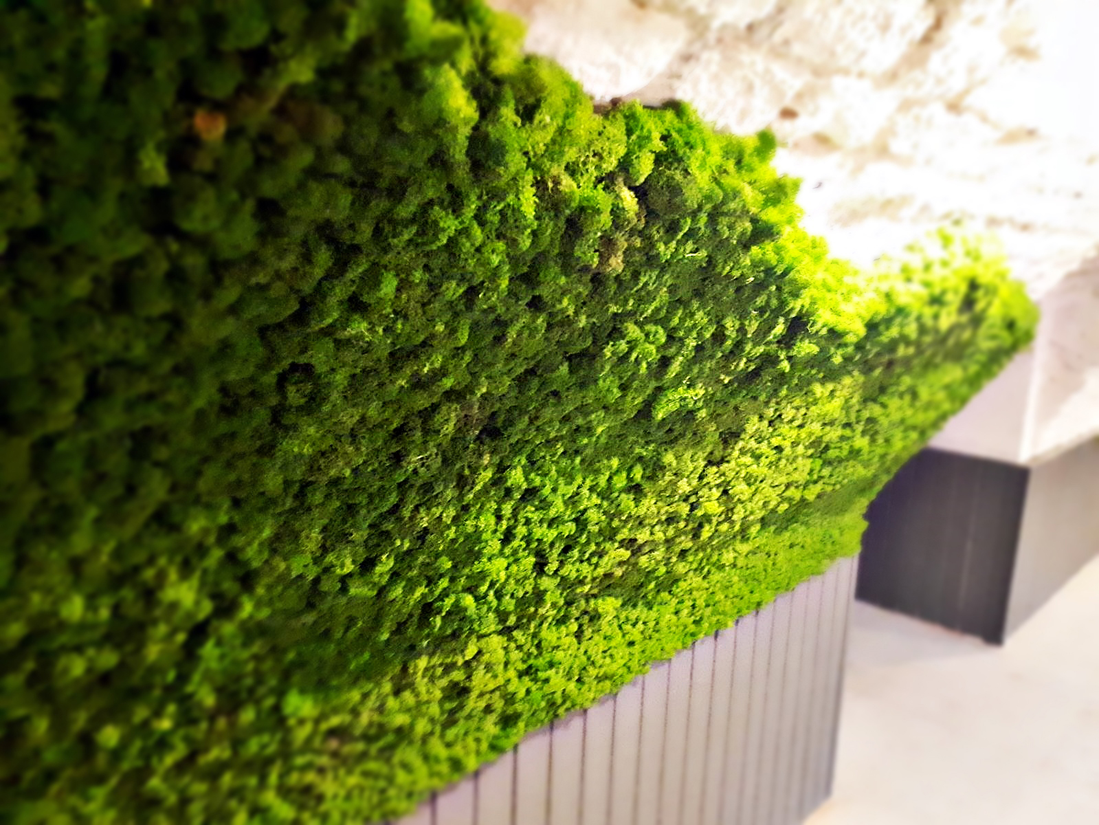 Highly flexible moss panels for cellar vault cladding, restaurant, functionally acoustic
